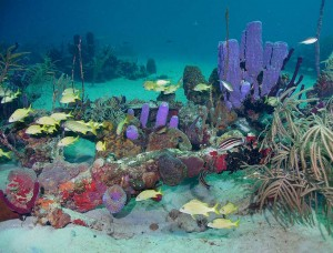 La vida submarina es variada.