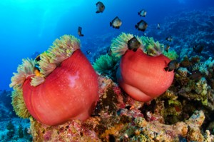 Vida marina en las Islas Giftun, Egipto.