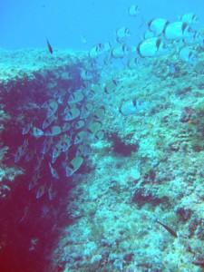Gran variedad de fauna en Punta Cautius.