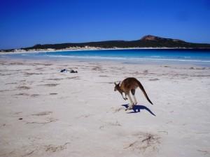 Canguros en la playa en Esperance