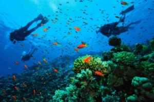 Dominica cuenta con numerosas reservas naturales.
