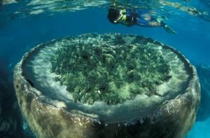 Diving en Ningaloo Reef.