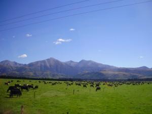 Vistas desde el TranzApline tren en Akaroa.