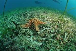 Turtle Reef es uno de los mejores buceos.