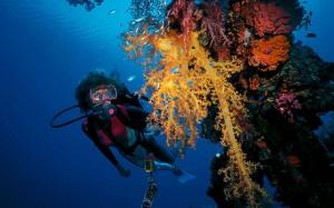 Diving en la Truk Lagoon, Micronesia.