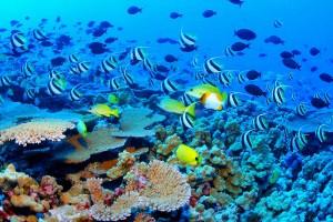 Espectacular vida marina en los corales de Belice.