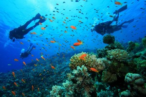 Espectacular mundo  submarino en Kanawa.