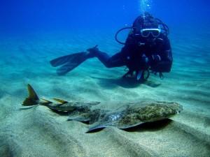 Sorprendente y abundante vida submarina.