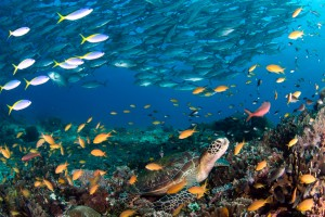 La vida marina es espectacular en Bohol, Philipinas.