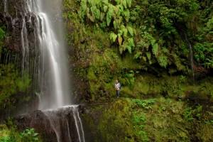 La naturaleza cubre Funchal.