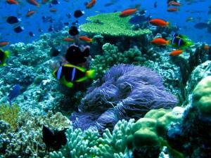 Vida submarina en Kauai.