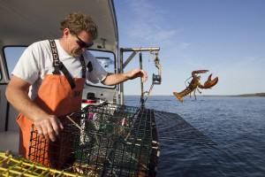 A la pesca de langostas.