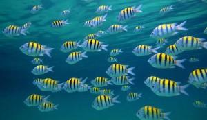 La diversidad de vida marina en Grenada es enorme.