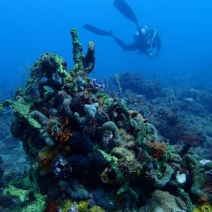 Grenada ofrece un buceo por descubrir en el Caribe.