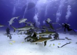 Encuentro con tiburones.