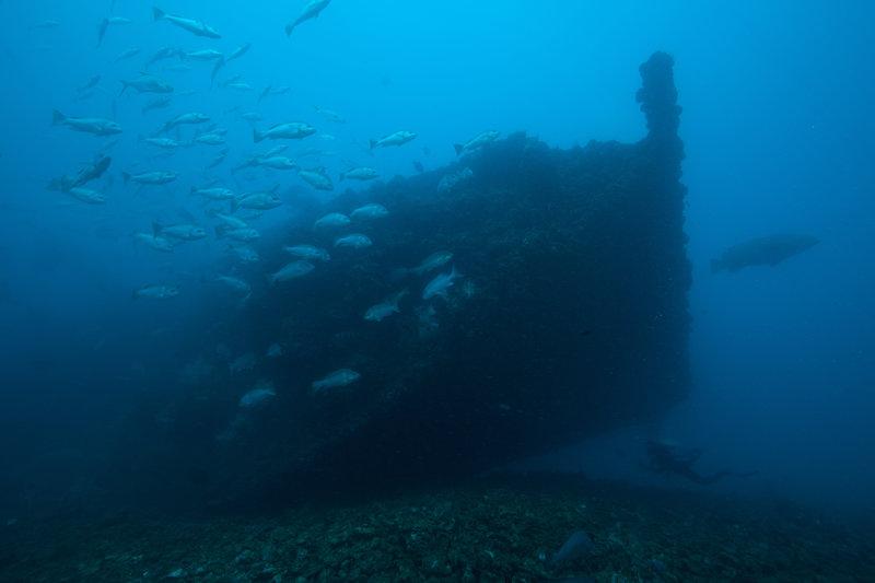 Barcos hundidos como el SS Yongala.
