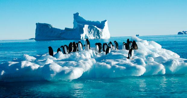 Pingüinos de la Antártica.