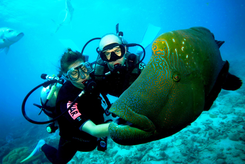 Razones para bucear, conocer vida marina.