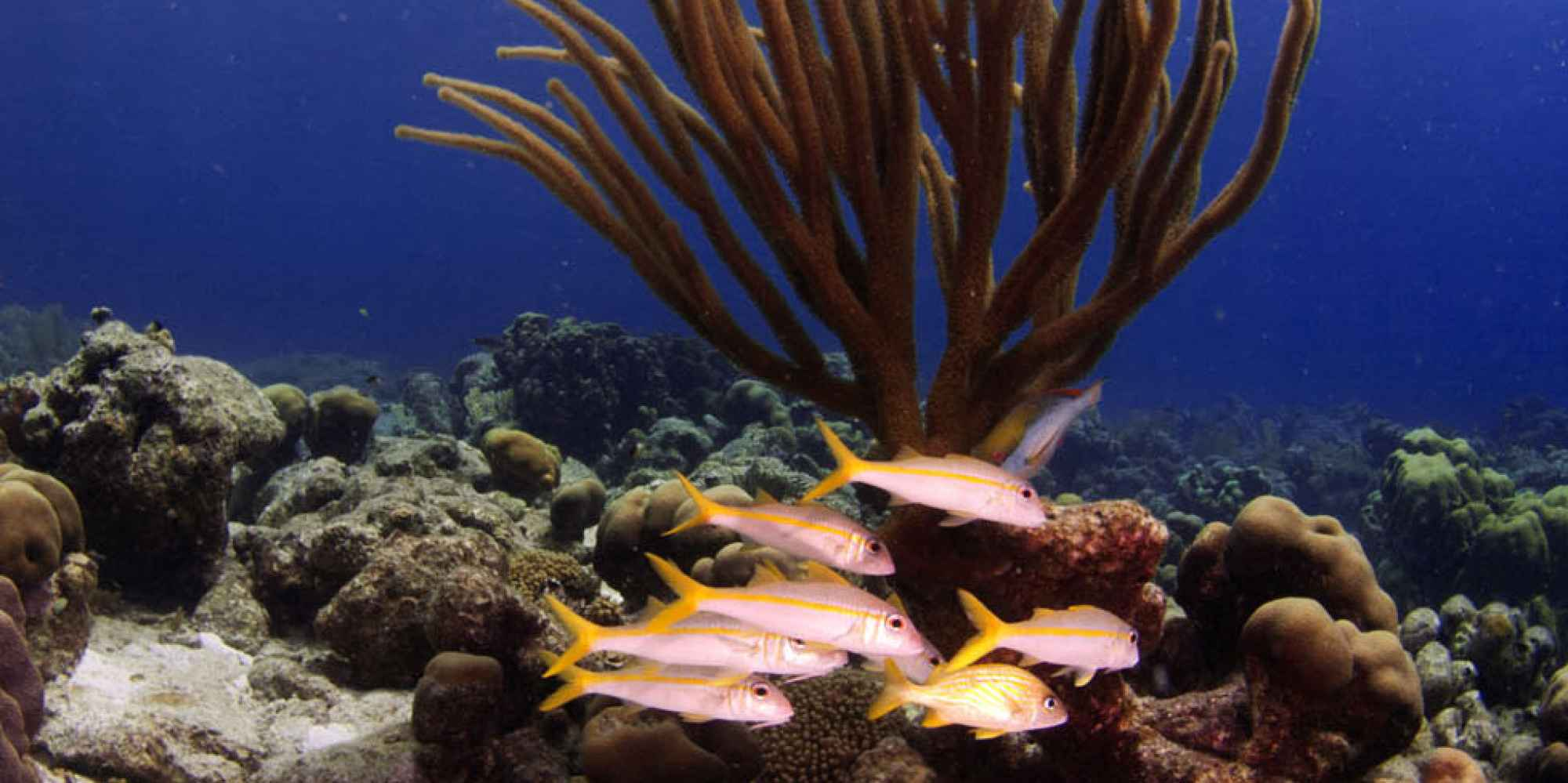 1000steps de Bonaire