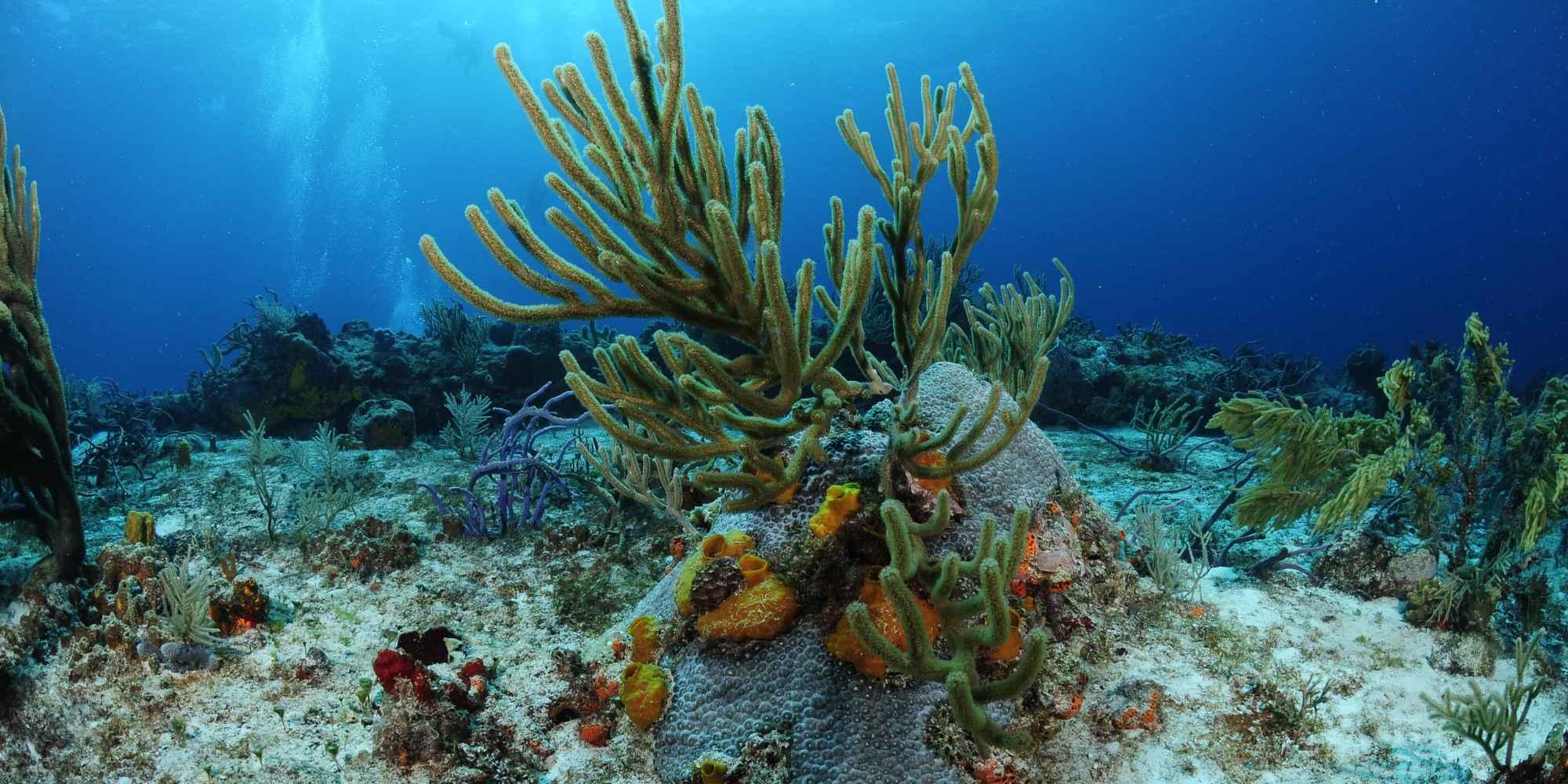 Paradise Reef en Cozumel