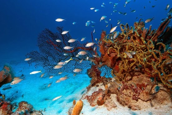 6. St. Vincent and the Grenadines