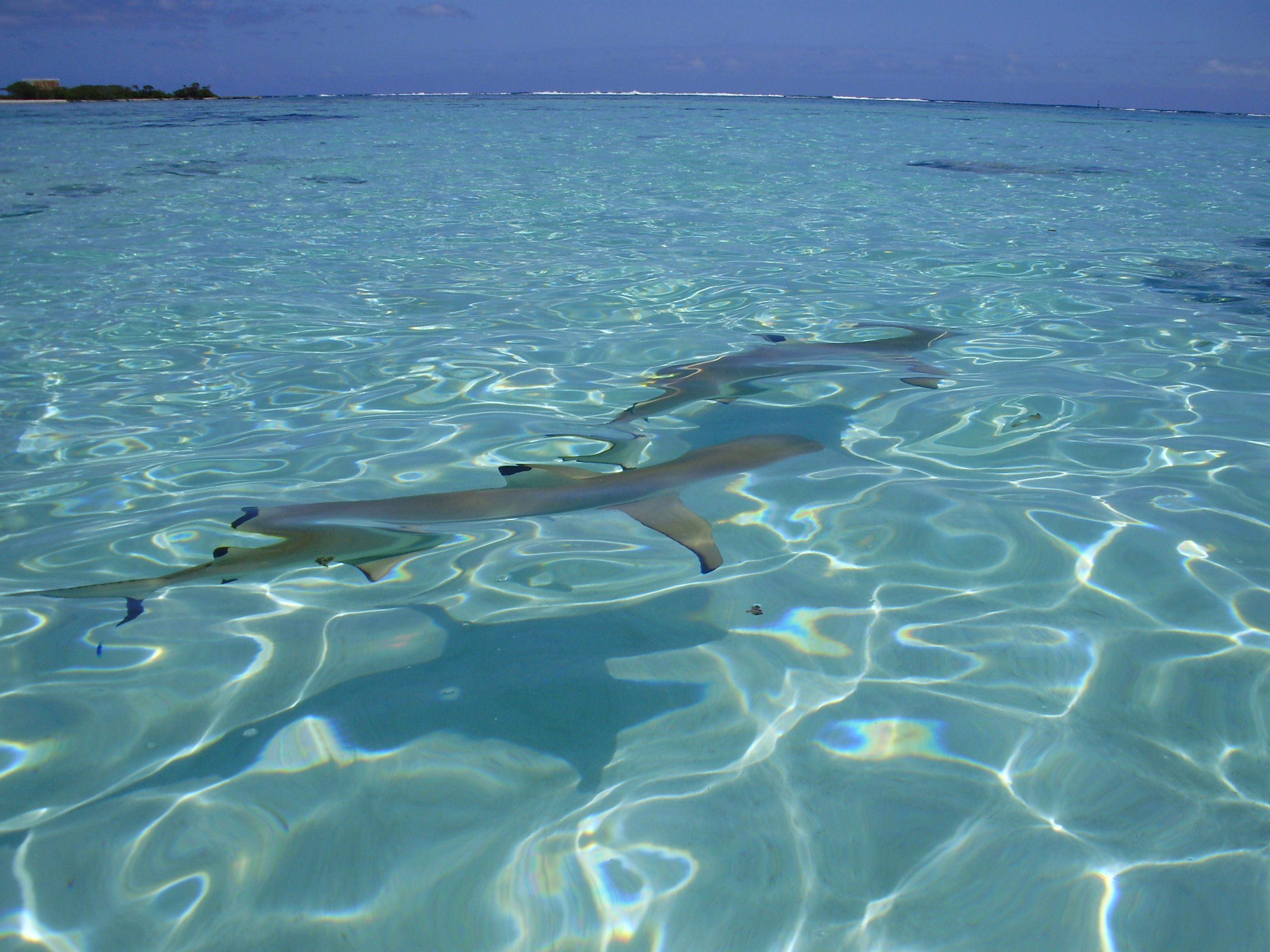 Snorkel en el pacifico 5 - 3 3
