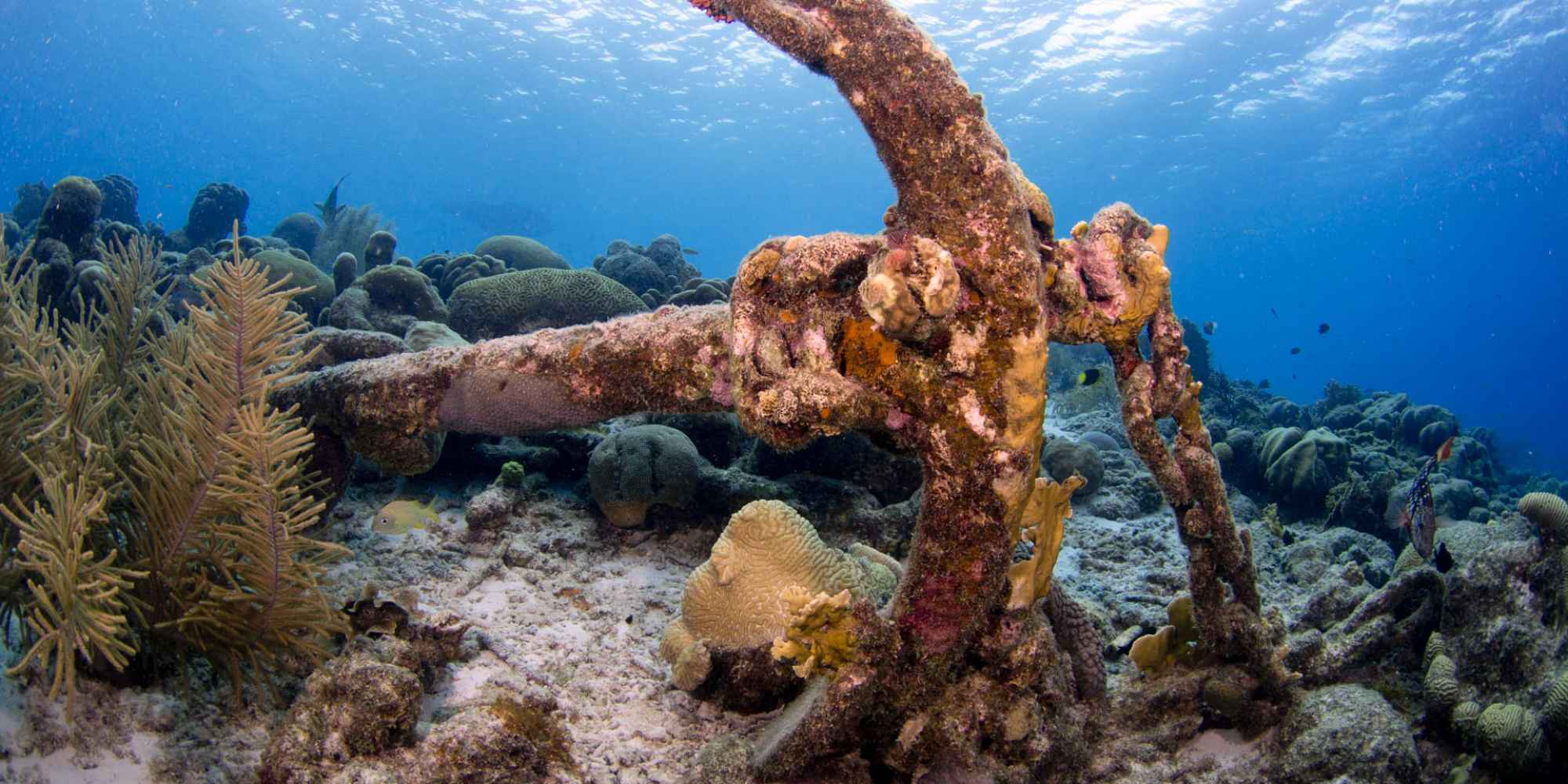 Karpata, diving en Bonaire
