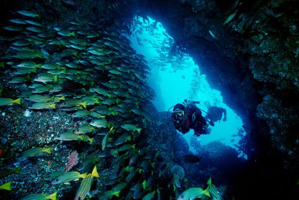 Destinos de buceo como Cocos Island en Costa Rica