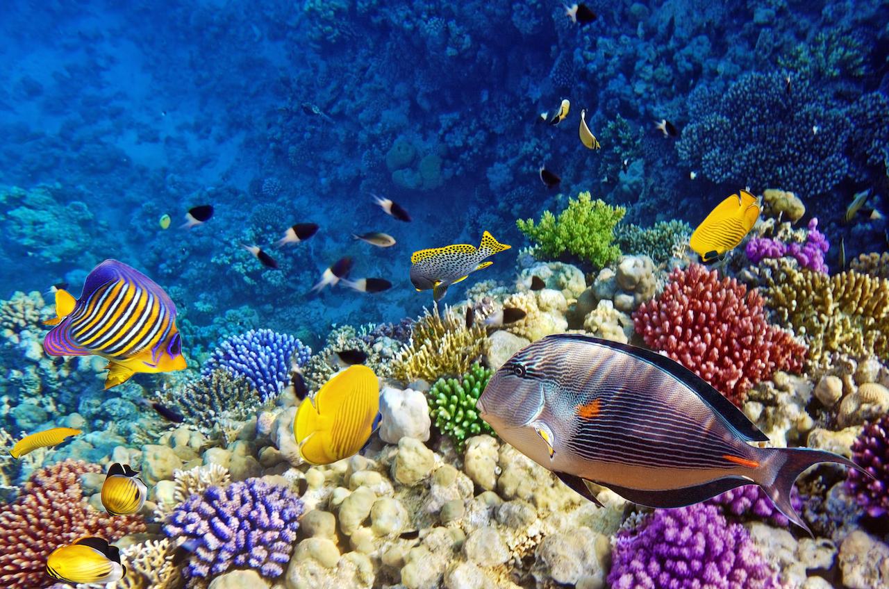 0.Portada Diving-Red-Sea-Egypt