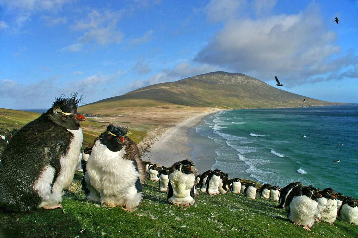 Pinguinos en crucero por Sudamérica