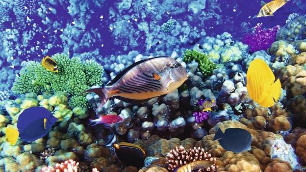 Buceo en Egipto y Mar Rojo