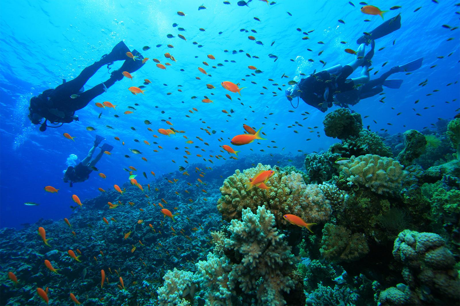 6.Turneffe-Atoll-Scuba-Diving-Belize