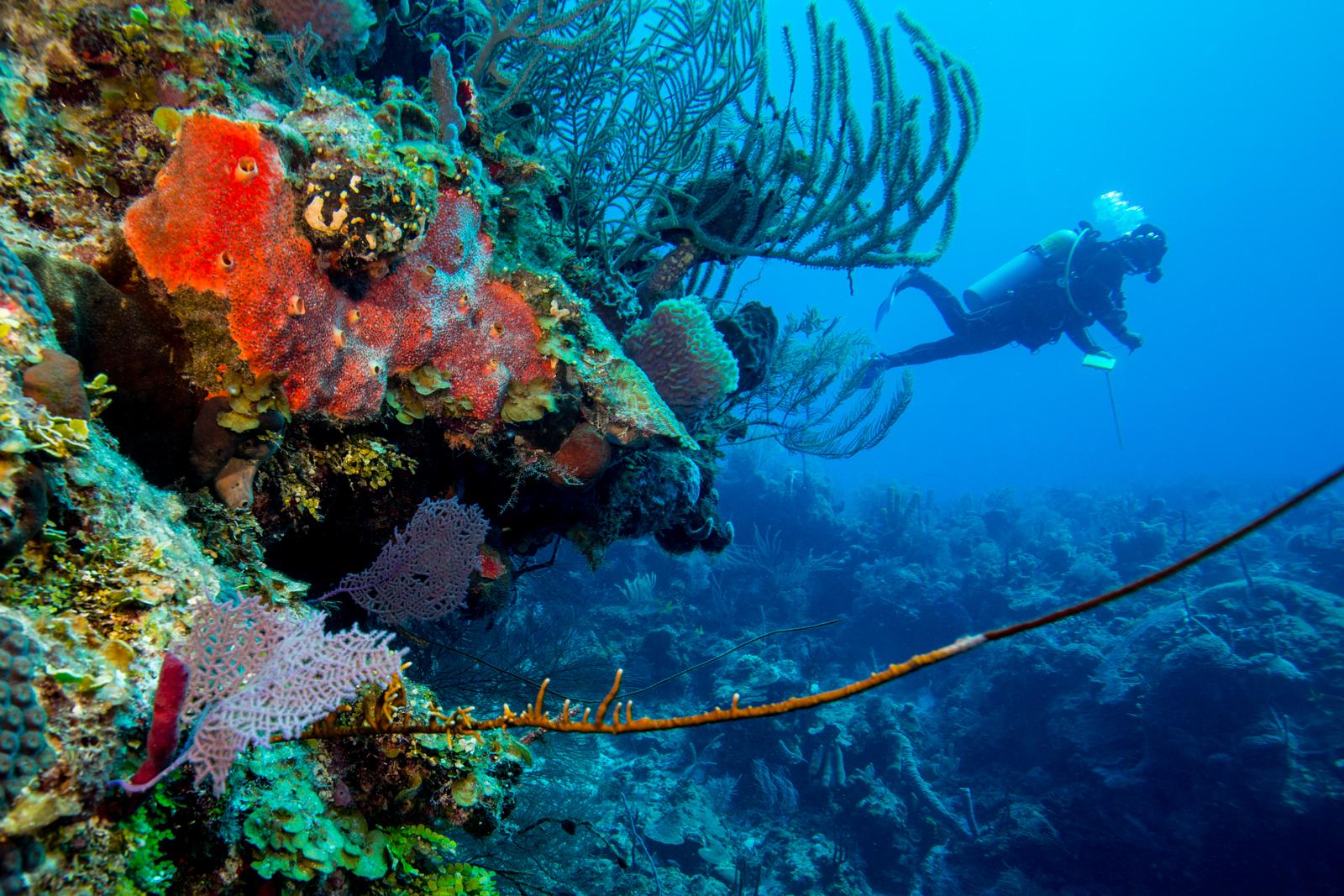Diving Belice