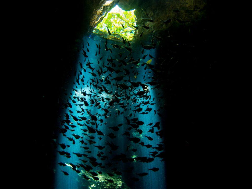 Buceo en Raja Ampat