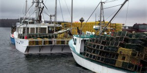Barcos de Langosta